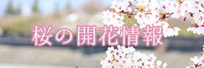 花の開花情報
