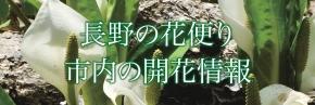 花の開花情報ページ(春・夏用)